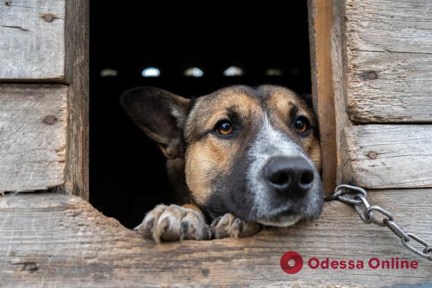 В Одесской области мужчина ответит в суде за жестокое избиение сторожевой собаки