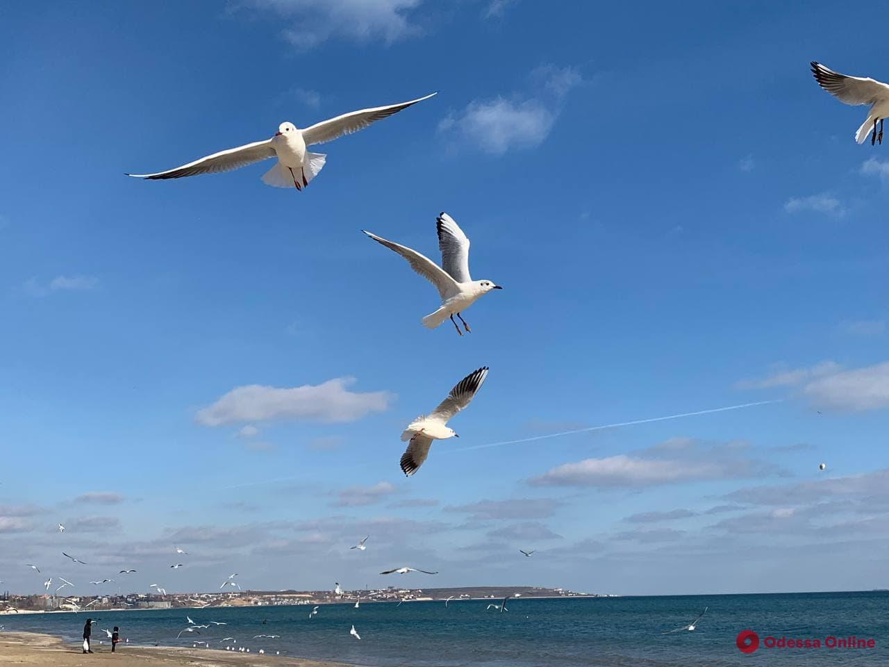 Море, солнце и чайки: ранняя весна в Лузановке (фото)