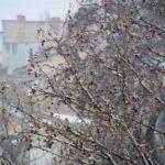 photo_2021-03-25_09-09-02 (3)