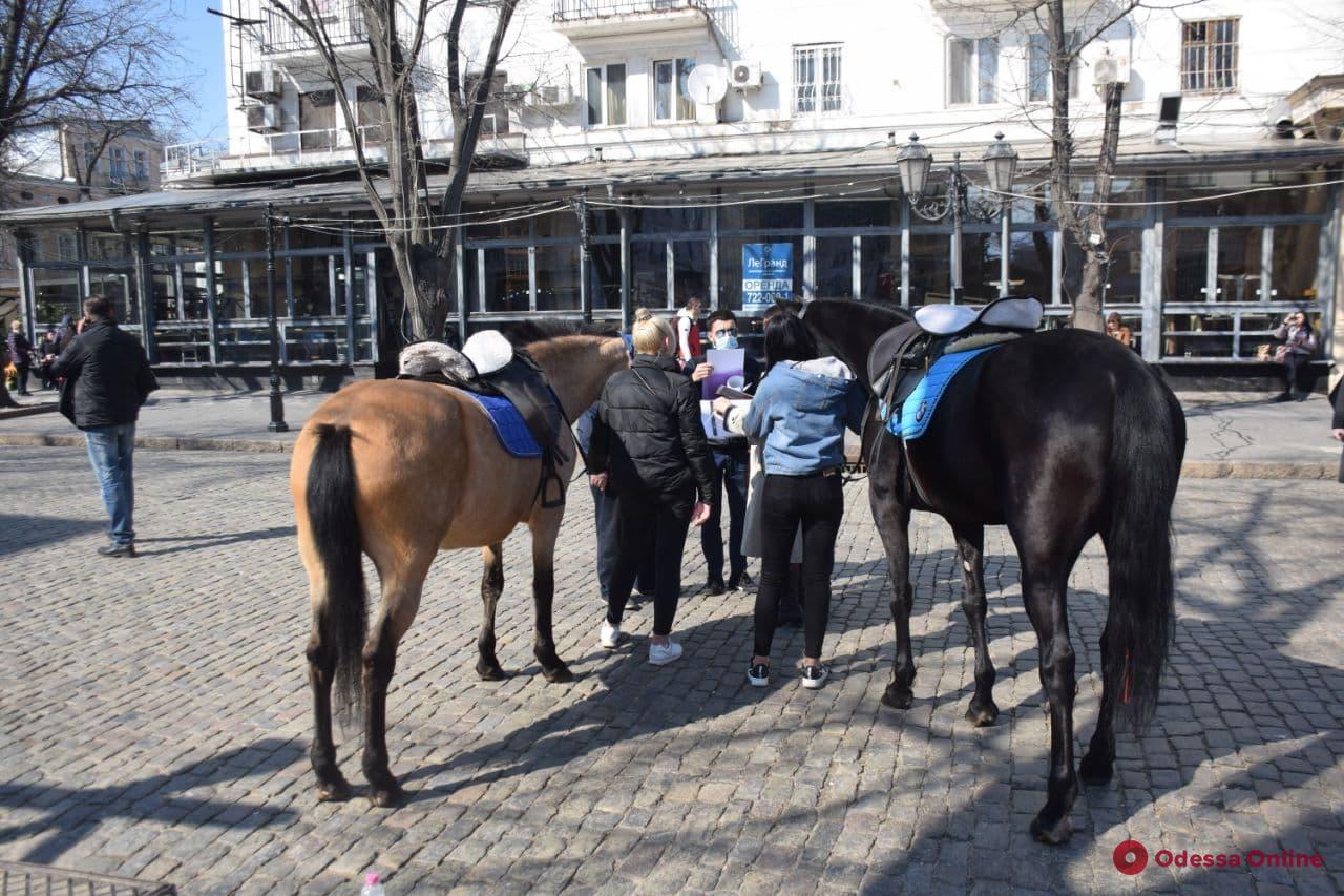 В Одессе проводят рейды по борьбе с эксплуатацией животных (фото)
