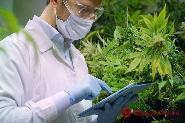 В Украине легализовали некоторые препараты с медицинским каннабисом