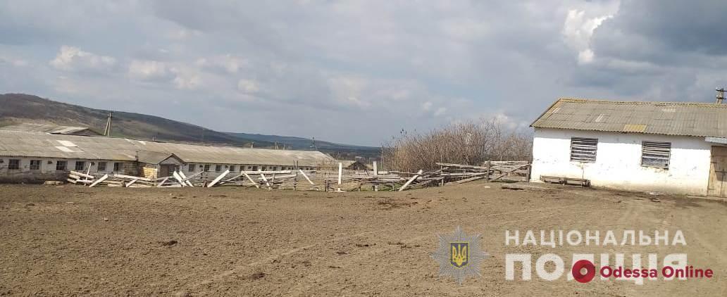 В Одесской области двое подростков «угнали» с фермы теленка