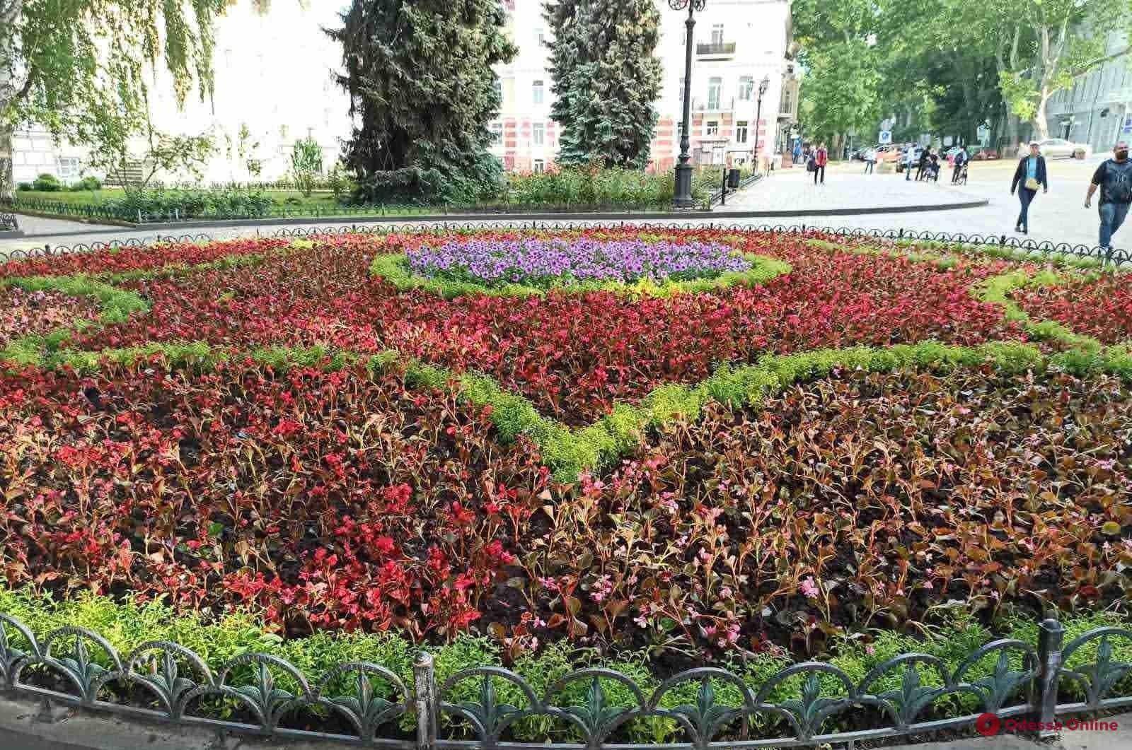 Этой весной в Одессе высадят 200 тысяч цветов