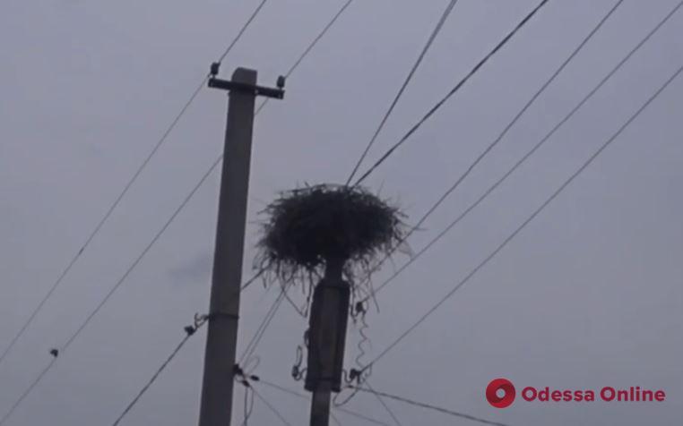 В селе под Одессой подстрелили самца аиста – энергетики помогли спасти самку (видео)