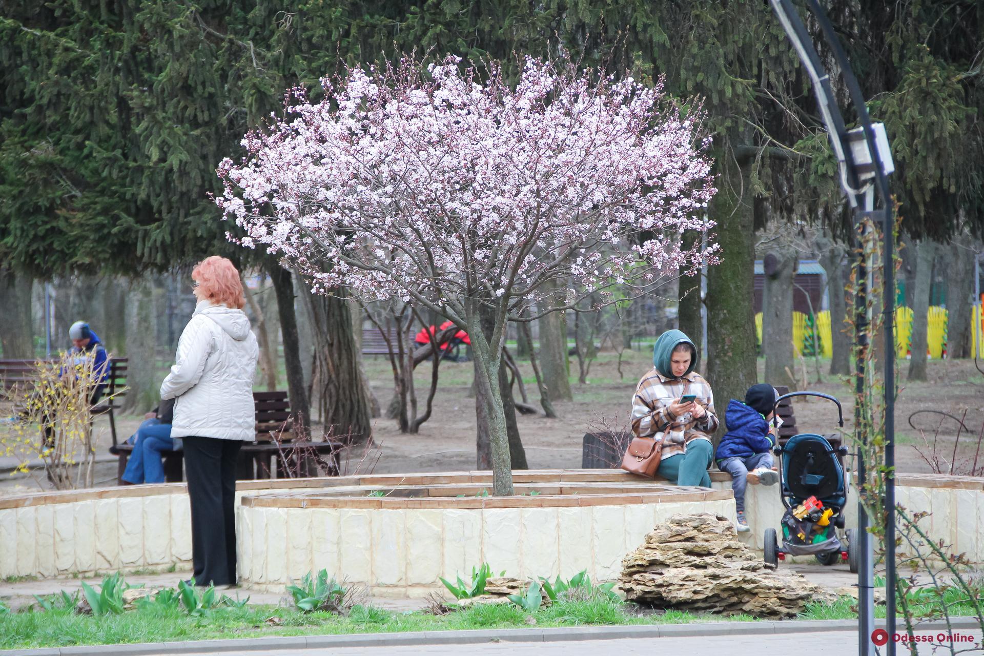 Какой будет погода в Одессе 16 апреля