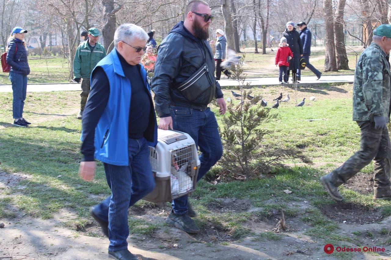 В пруд парка Победы вернули красноухих черепах(фото)