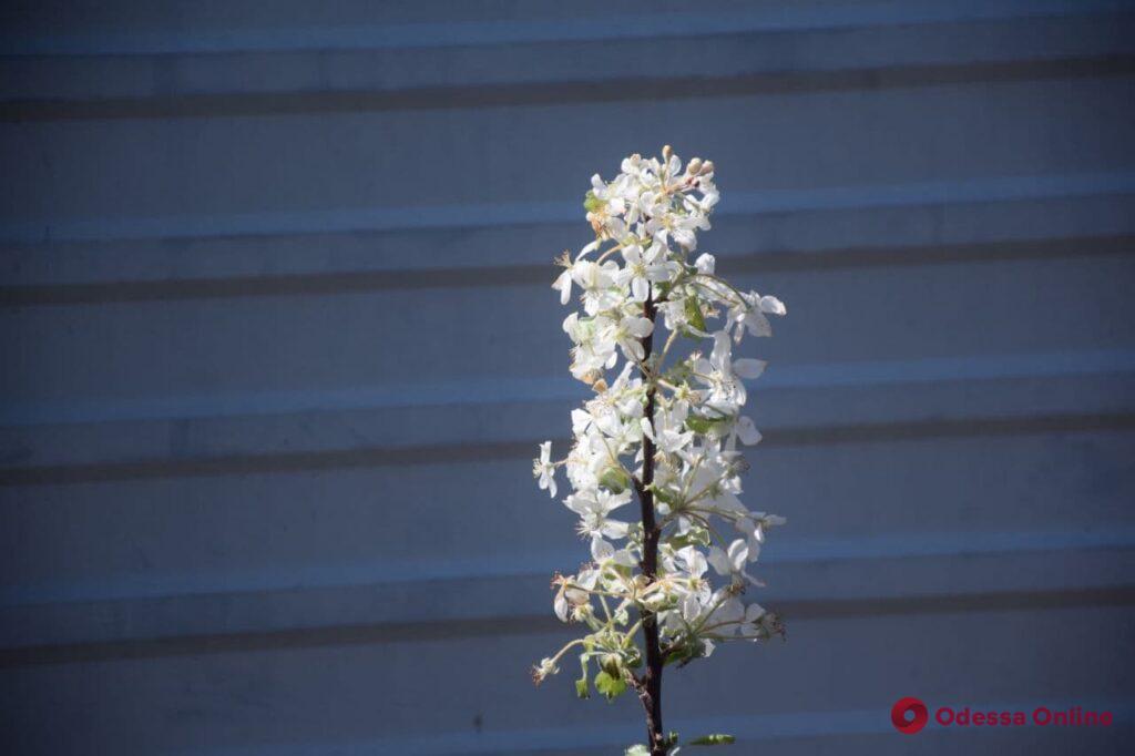 В Одессу пришла настоящая весна (фоторепортаж)
