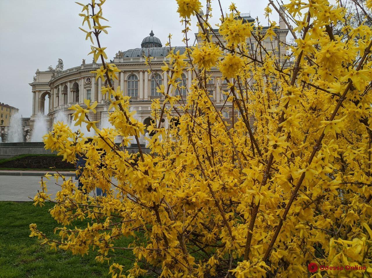 Дождались: в Одессе расцветают магнолии (фото)