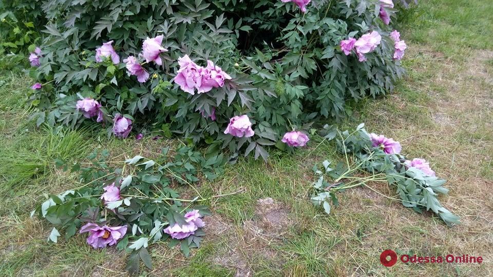В Одесском ботаническом саду вандалы уничтожили уникальные растения (фото)