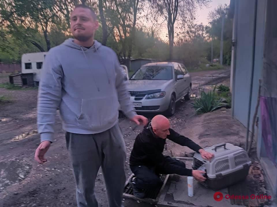 В Одесском зоопарке спасают малую белую цаплю