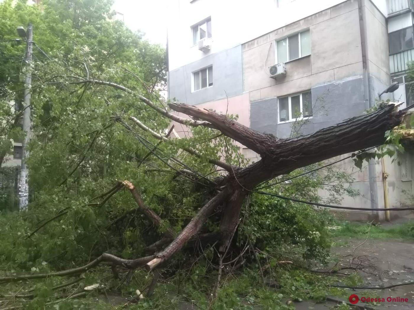 На проспекте Шевченко из-за упавшего дерева обесточено три дома