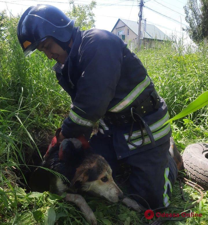 На Слободке спасатели доставали упавшую в яму собаку