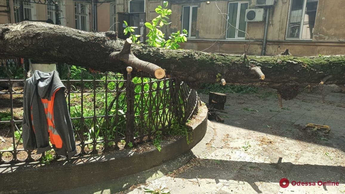 Во дворе на Гоголя рухнуло массивное дерево (фото)