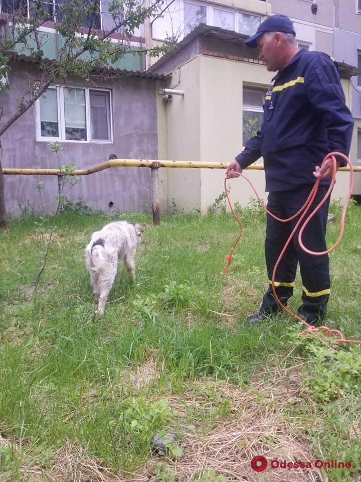 В Рени спасатели доставали провалившуюся в яму собаку