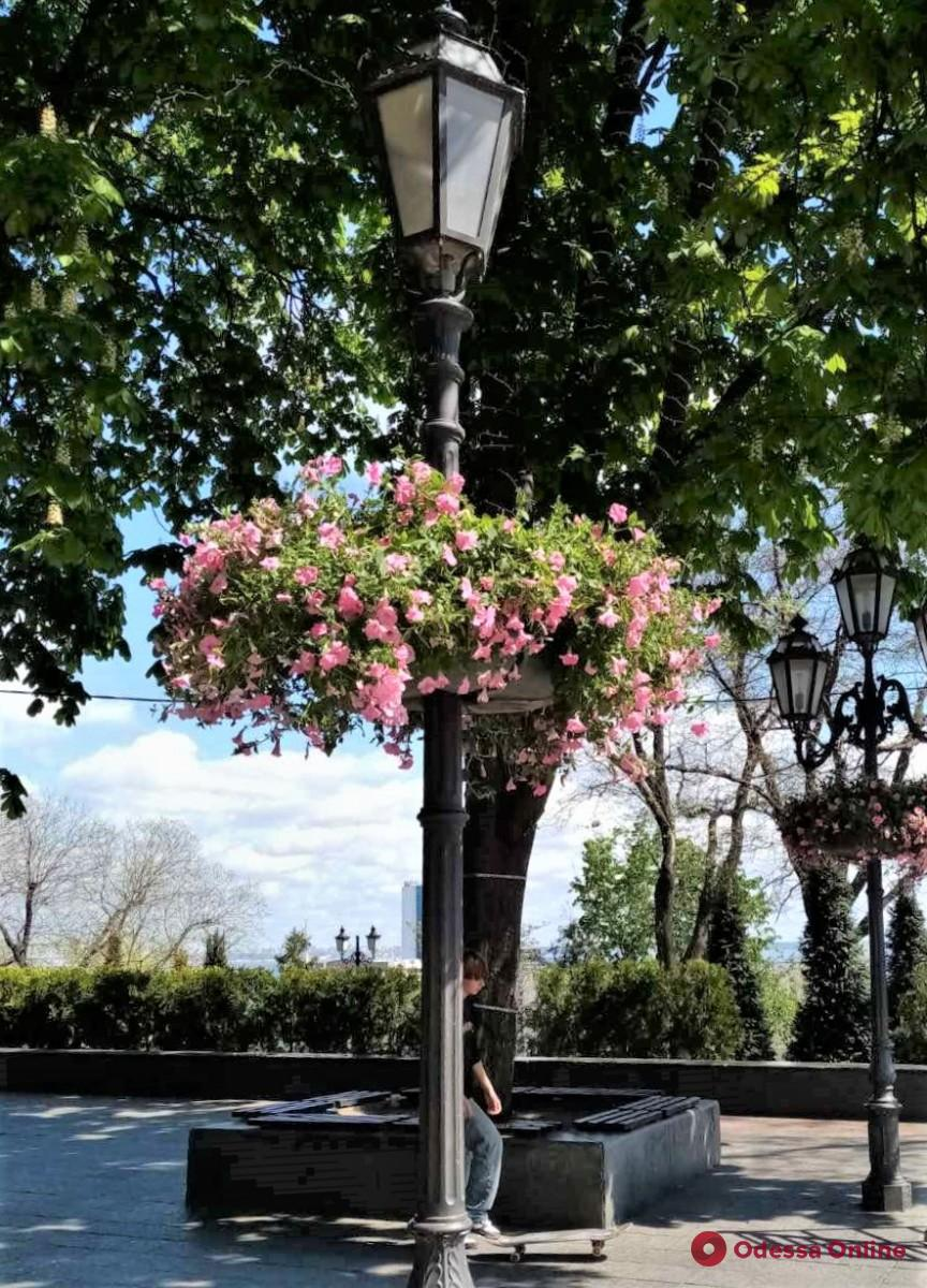 Одессу украшают подвесными вазами с цветами