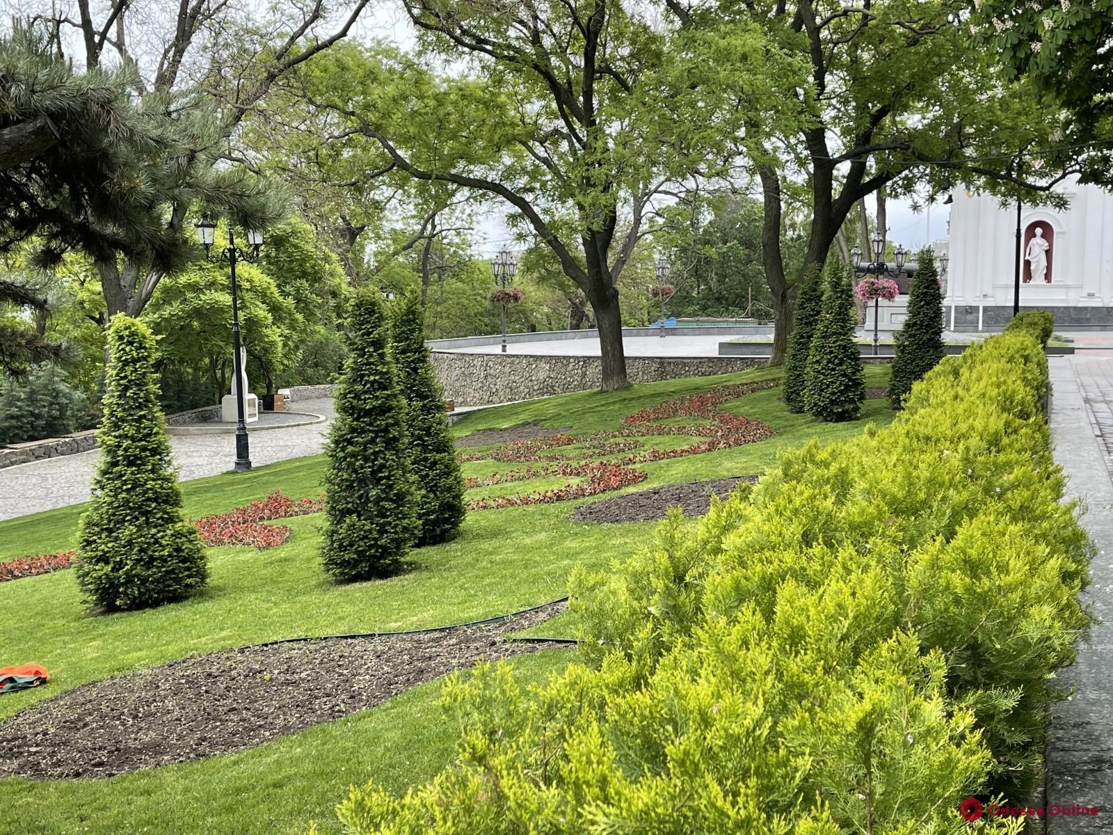 Бегонии, петунии и сальвии: Одессу украсят 700 тысяч летних цветов