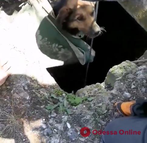 Под Одессой спасли провалившуюся в 20-метровый колодец собаку
