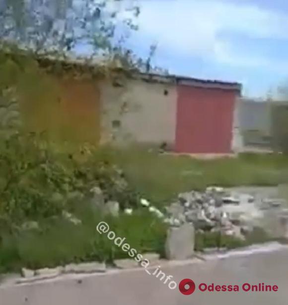 В Белгороде-Днестровском мужчина застрелил одну бездомную собаку и ранил другую