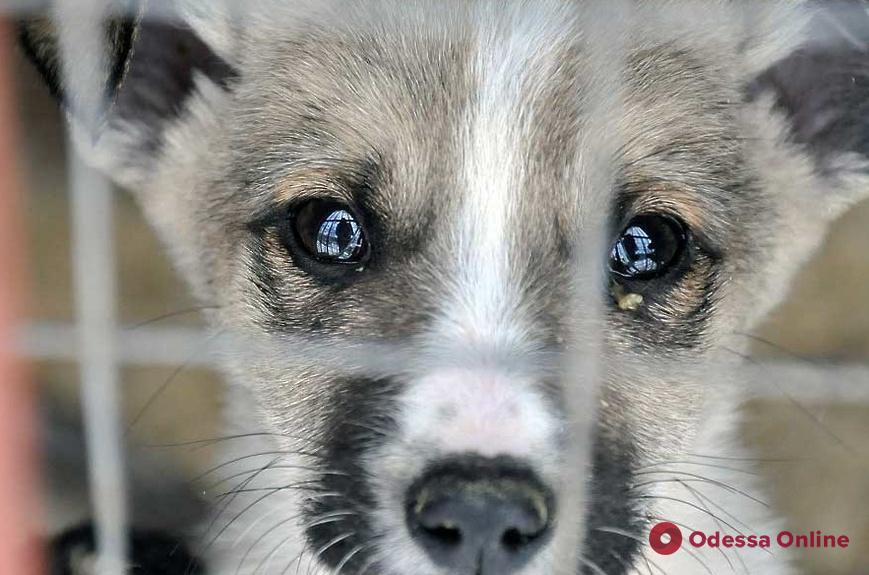 Девять изможденных собак и семь мертвых котов: одесские полицейские расследуют факт жестокого обращения с животными