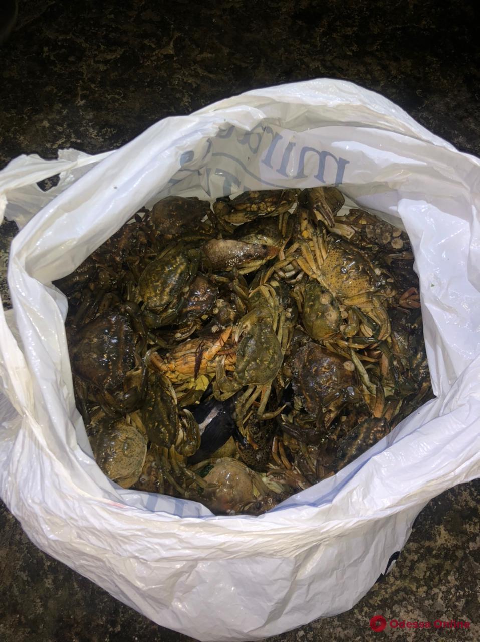 В Одесской области поймали браконьера, который наловил краснокнижных крабов на три миллиона