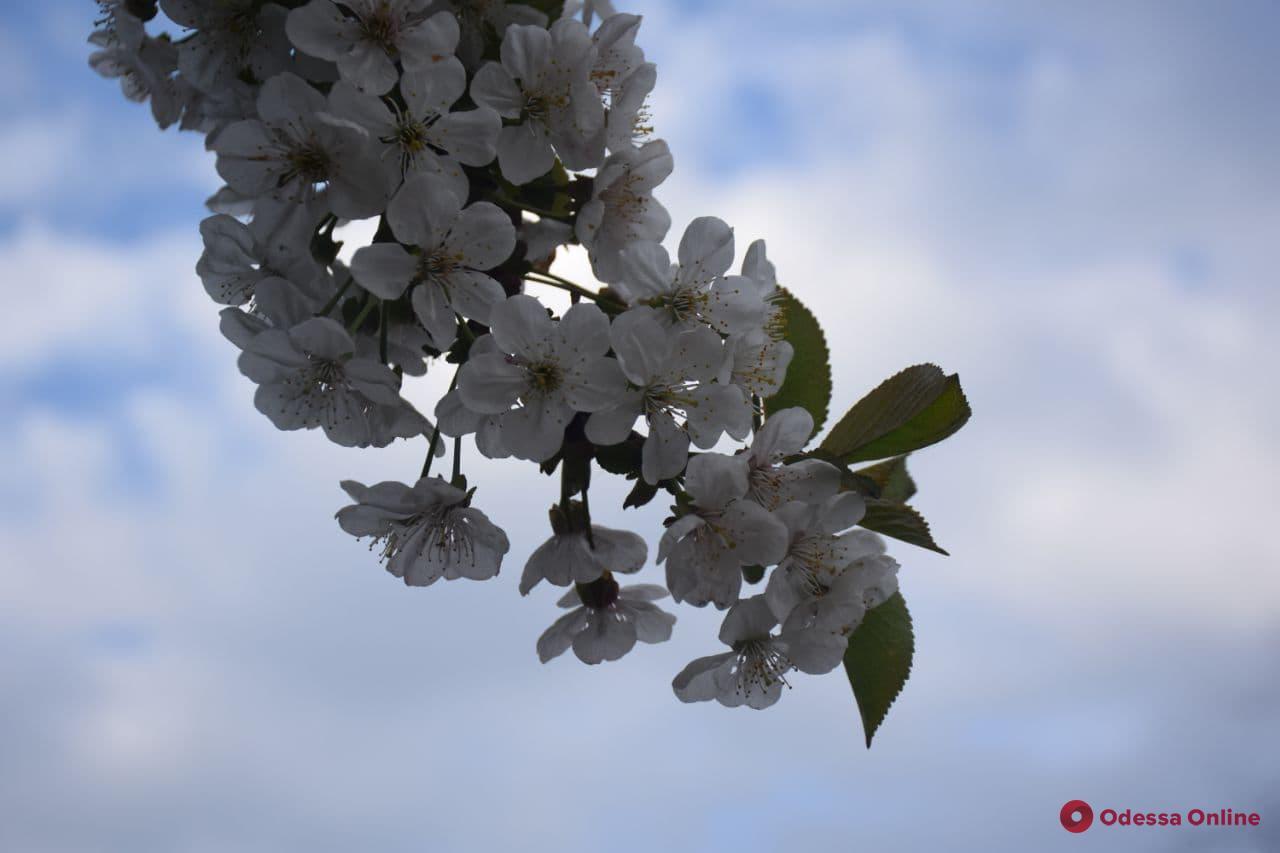 Какой будет погода в Одессе и области 4 мая