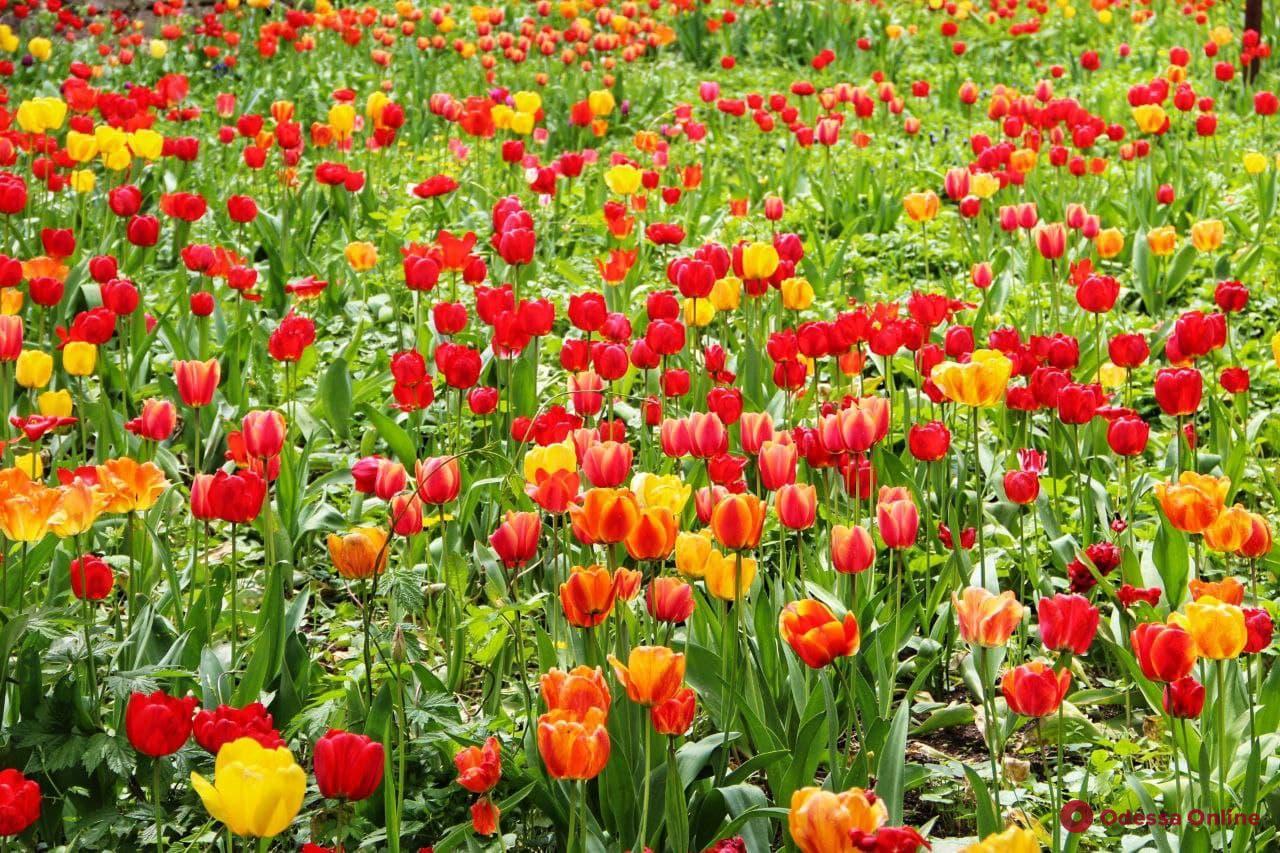 Май, божьи коровки и цветы: яркие краски Одесского ботсада (фоторепортаж)