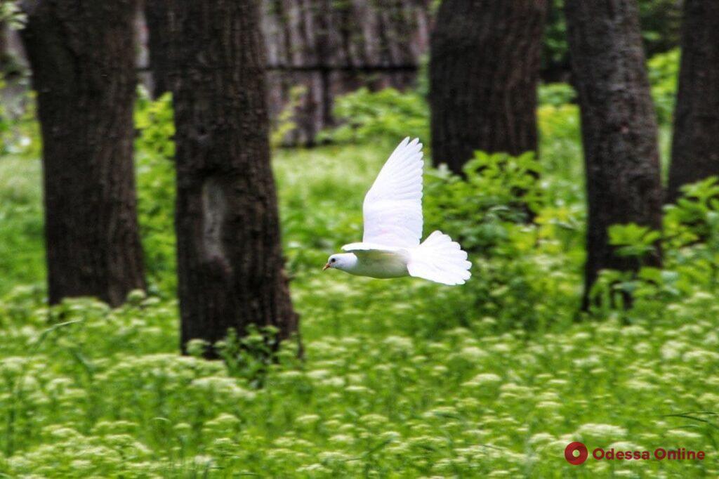 Дюковский парк: одесские «джунгли» с богатой фауной (фоторепортаж)