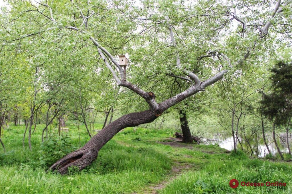 Парк Савицкого: «уголок природы» на Дальних Мельницах (фоторепортаж)