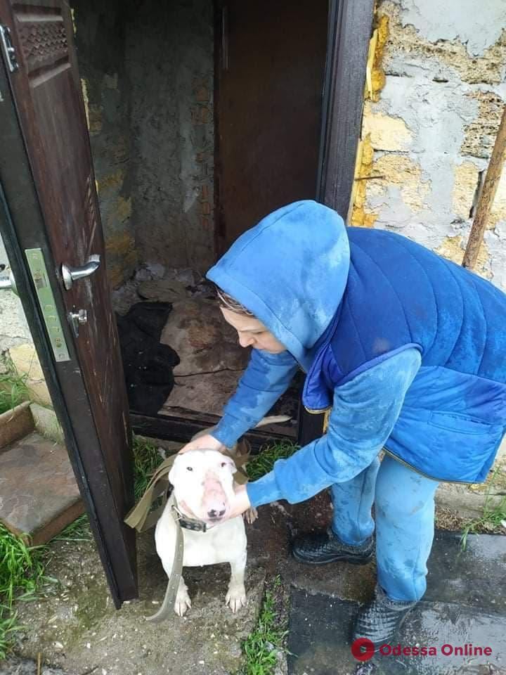 Одесские зоозащитники, спасая собак, обнаружили плантацию конопли