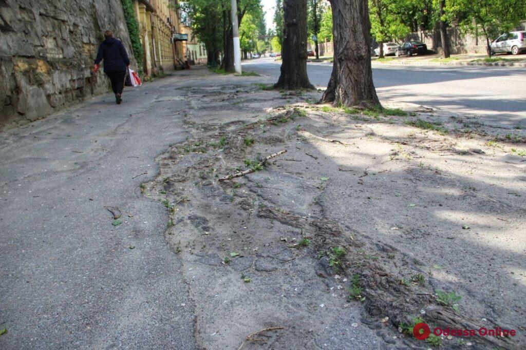 Всесильная природа: одесские здания и тротуары захватывают растения (фоторепортаж)