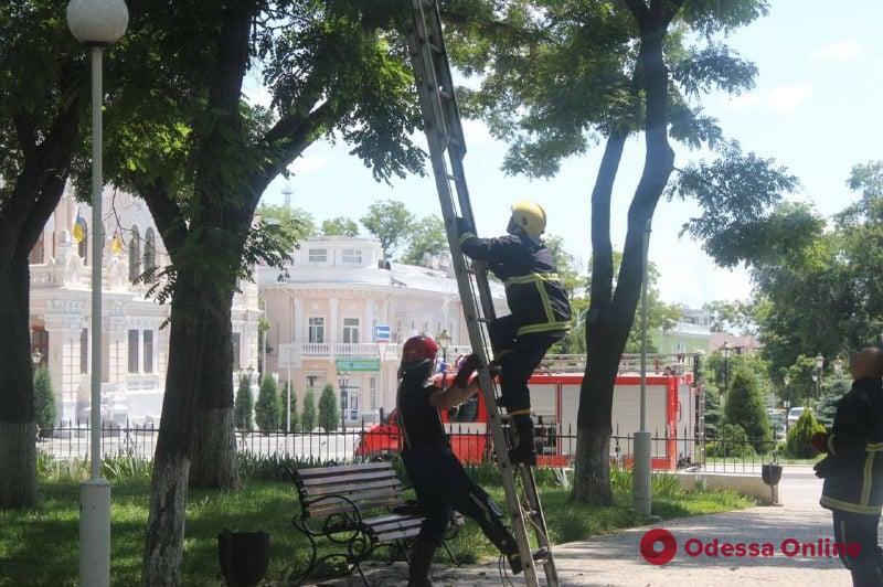 В Измаиле сотрудники ГСЧС спасли застрявших на дереве котят (фото)