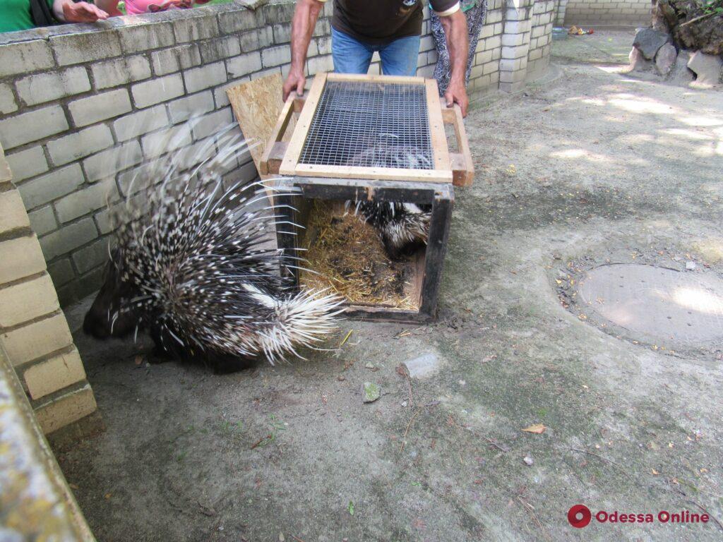 Индийские дикобразы в обмен на египетских гусей: Одесский зоопарк отправил пополнение в Николаев (фото)
