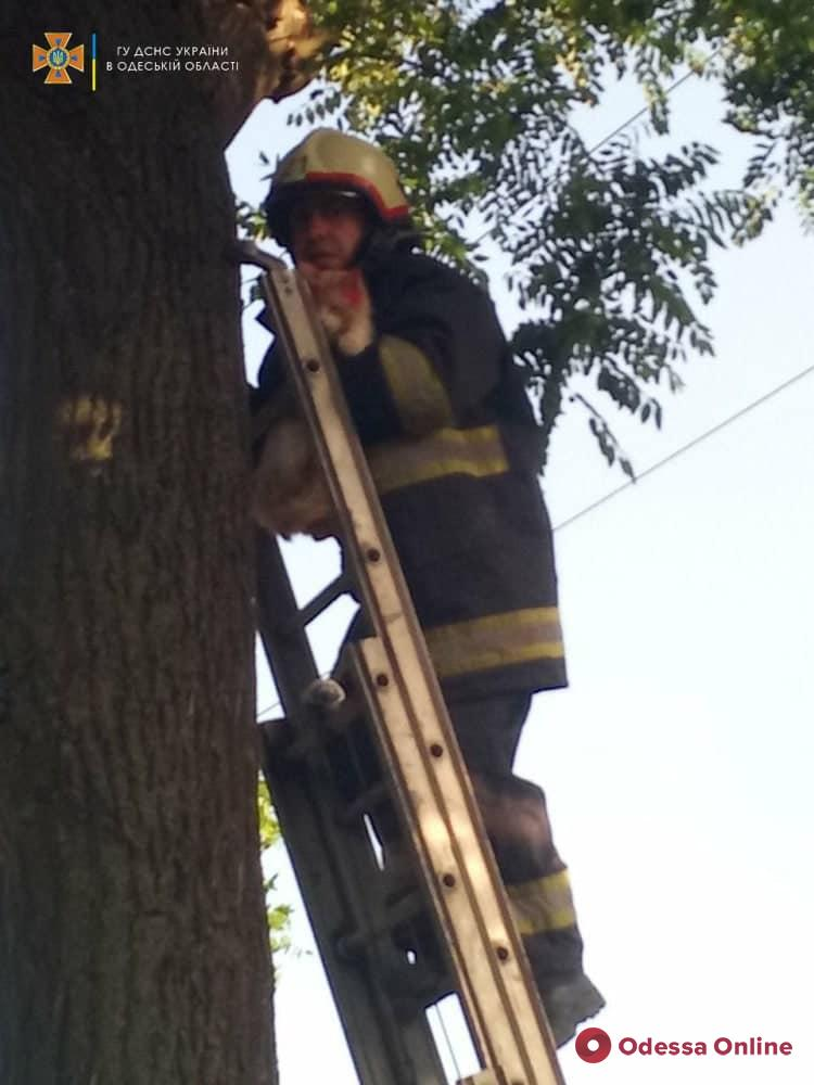 В Измаиле спасатели снимали кошку с высокого дерева (фото)