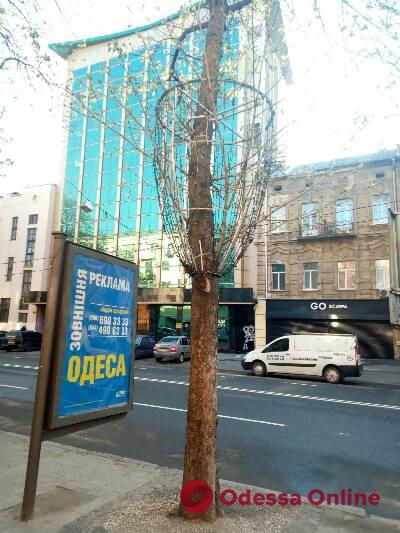 Благоустройство Екатерининской: предпринимателей просят снять иллюминацию с деревьев