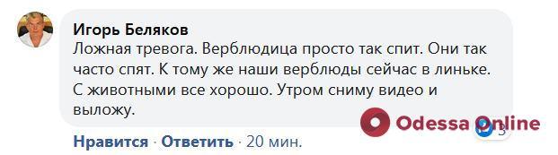 «Ложная тревога»: директор Одесского зоопарка прокомментировал видео с «облысевшим» верблюдом