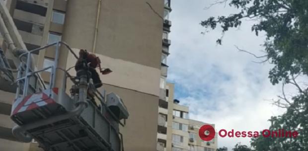 На Литературной спасли застрявшего на дереве кота (видео)