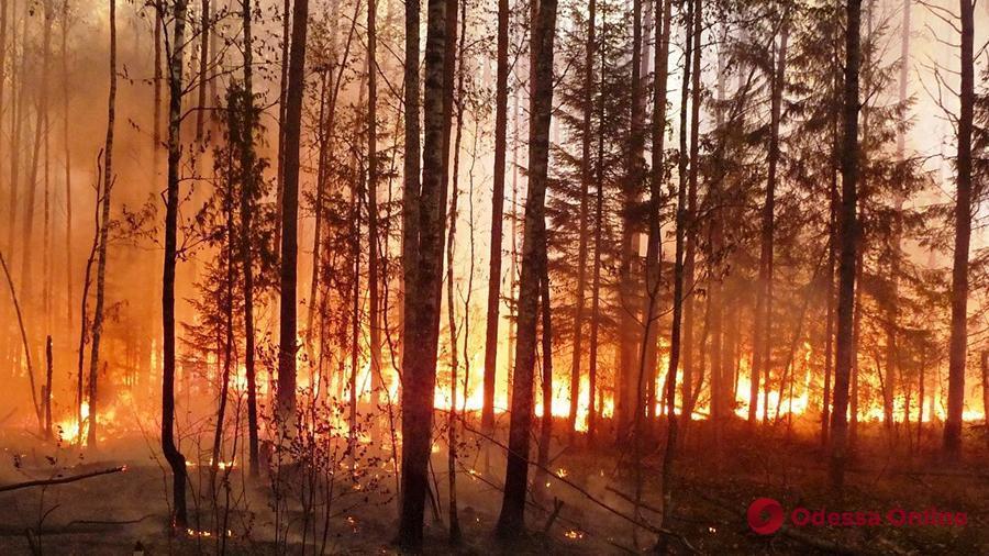 Безопасность лесов Одесской области обойдется налогоплательщикам в 47 миллионов гривен