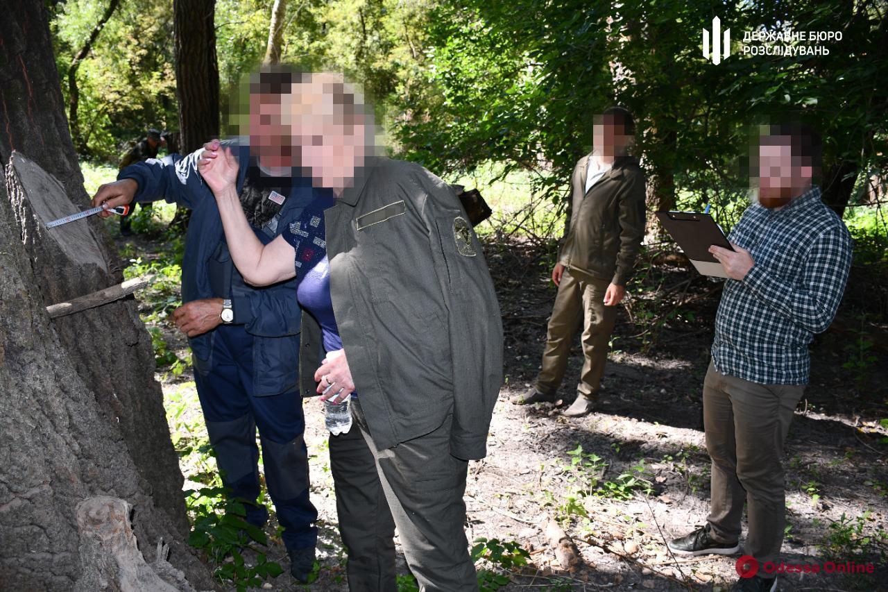 В Одесской области лесничий «не заметил» вырубку более 300 деревьев на полтора миллиона