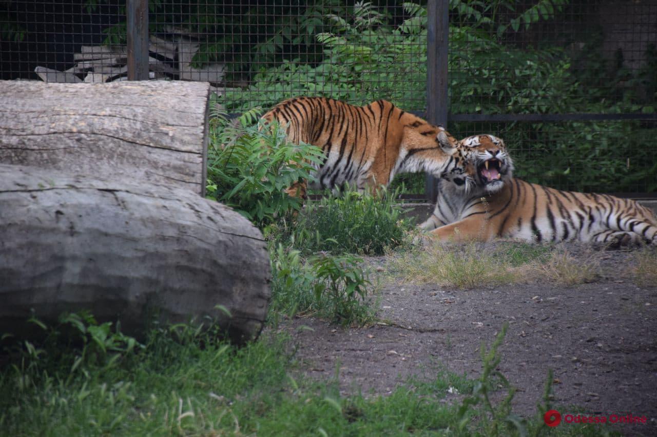 Кормили волчат и перетягивали канат: в одесском зоопарке провели спортивный праздник (фото)