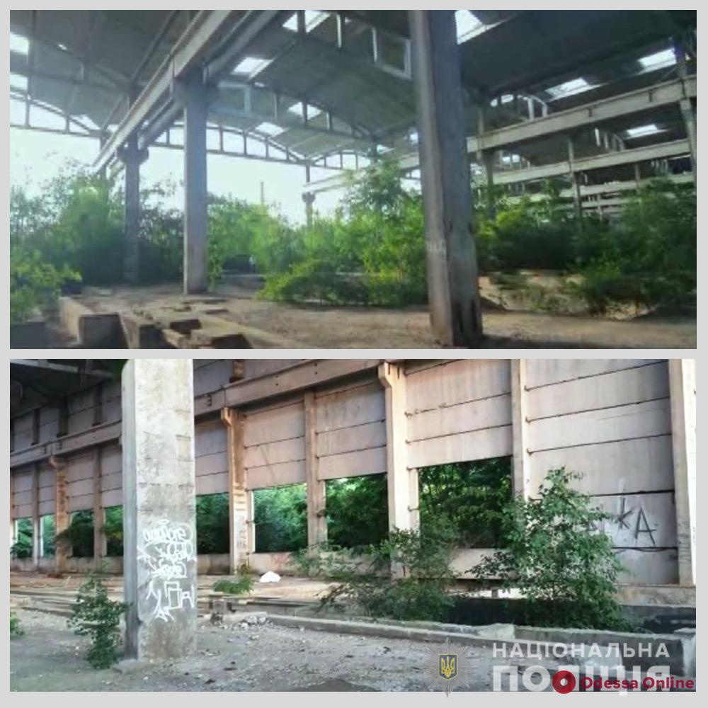 Закопали труп на заброшенном заводе: задержан четвертый подозреваемый в убийстве врача