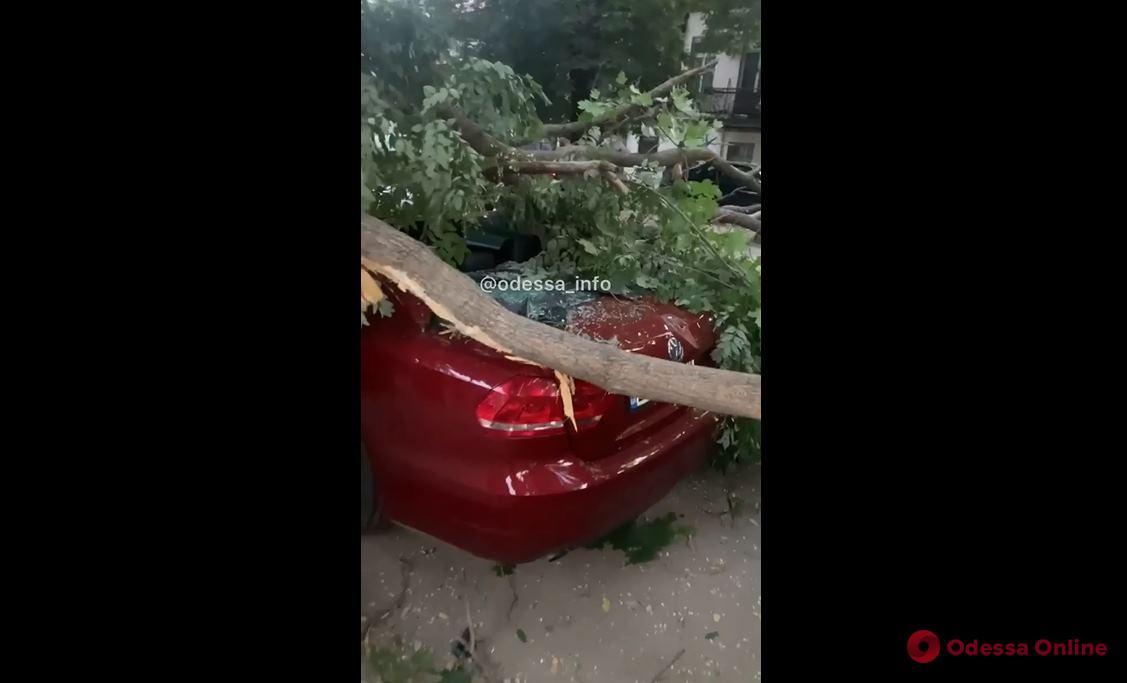 На Михайловской массивная ветка рухнула на автомобили (видео)