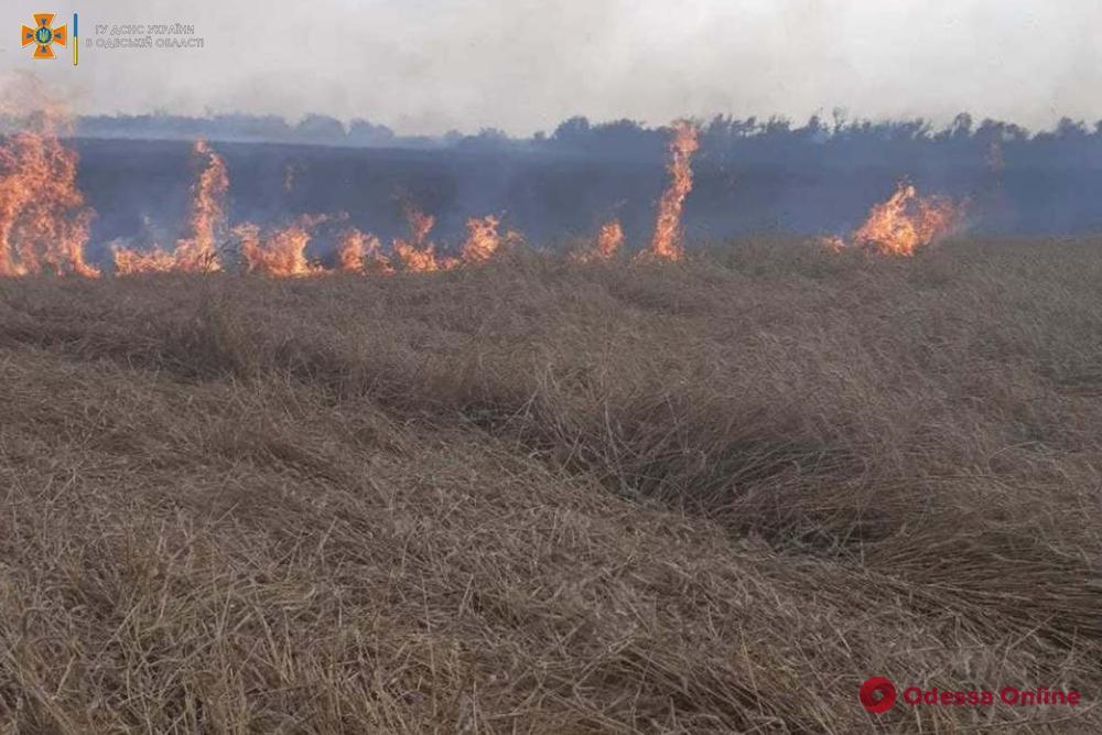 В Одесской области из-за удара молнии загорелось пшеничное поле