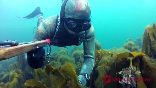 В Черноморске ищут пропавшего во время подводной охоты мужчину