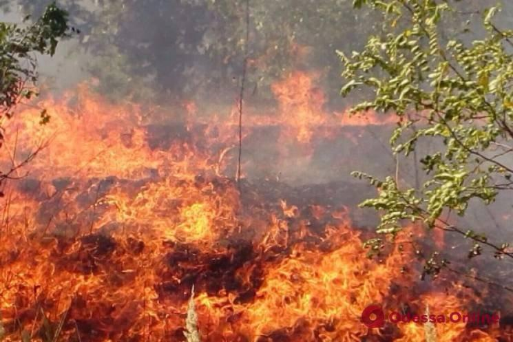 Огонь охватил 1000 квадратных метров: на Куяльнике тушили большой пожар