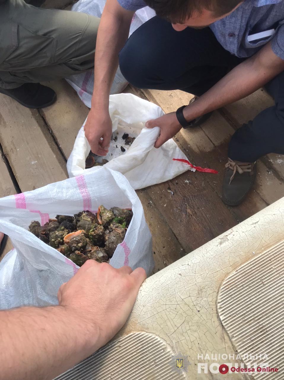 В Одесской области браконьер наловил мидий и рапанов на четверть миллиона гривен