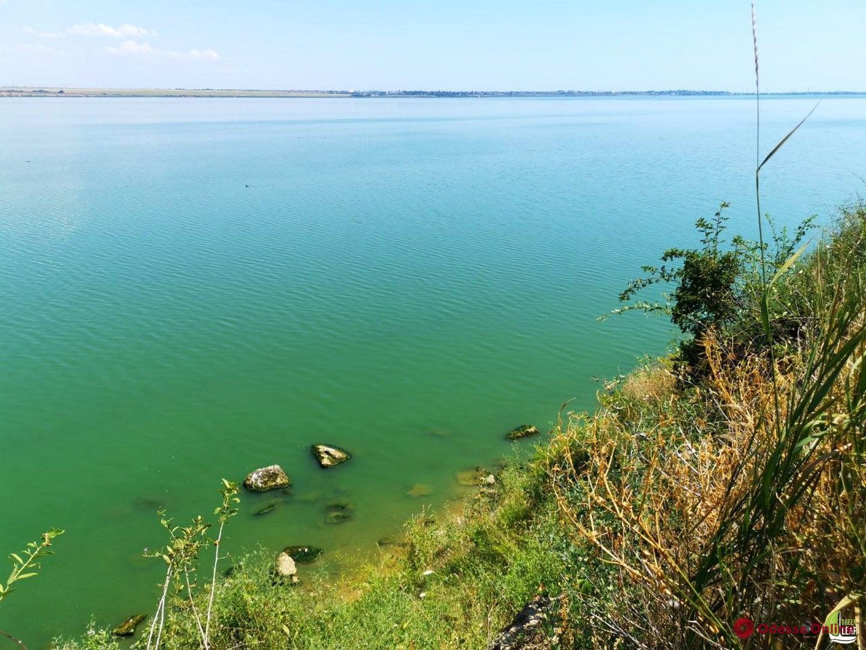Из-за бурного цветения водорослей на Хаджибейском лимане произошел массовый мор рыбы