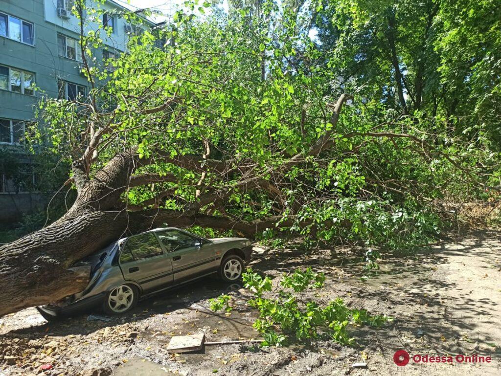 На Черемушках гигантское дерево рухнуло на припаркованные машины (фото)