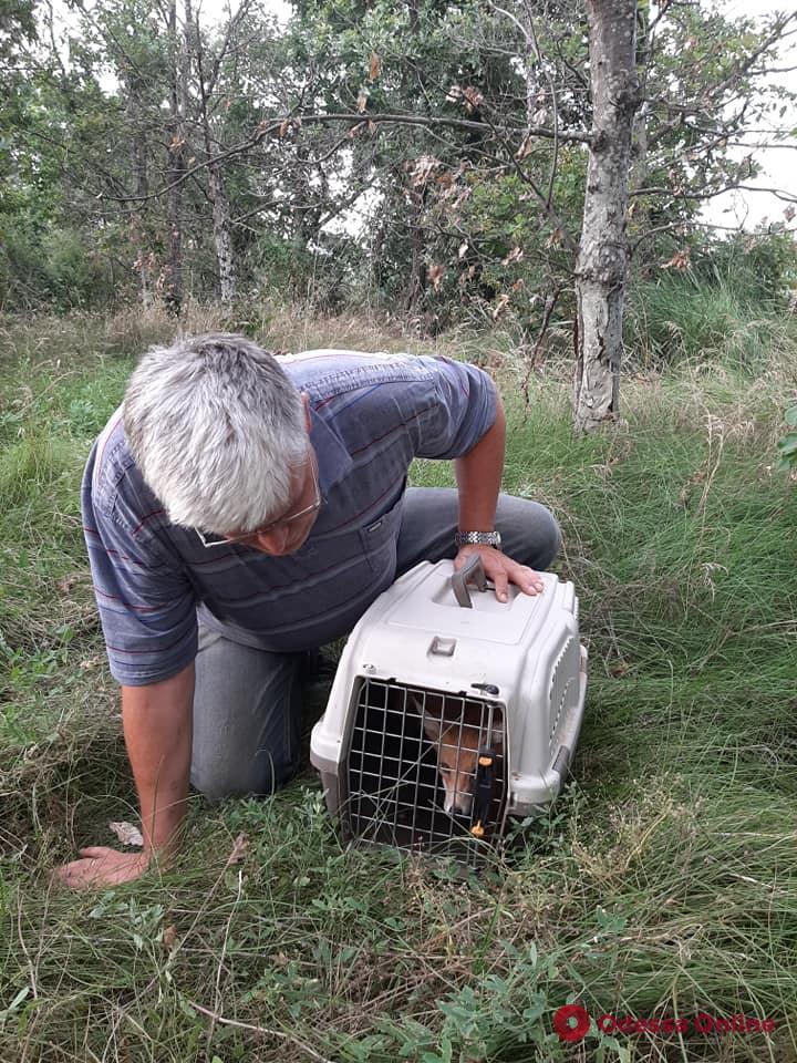 Директор Одесского зоопарка выпустил в дикую природу четырех лисят