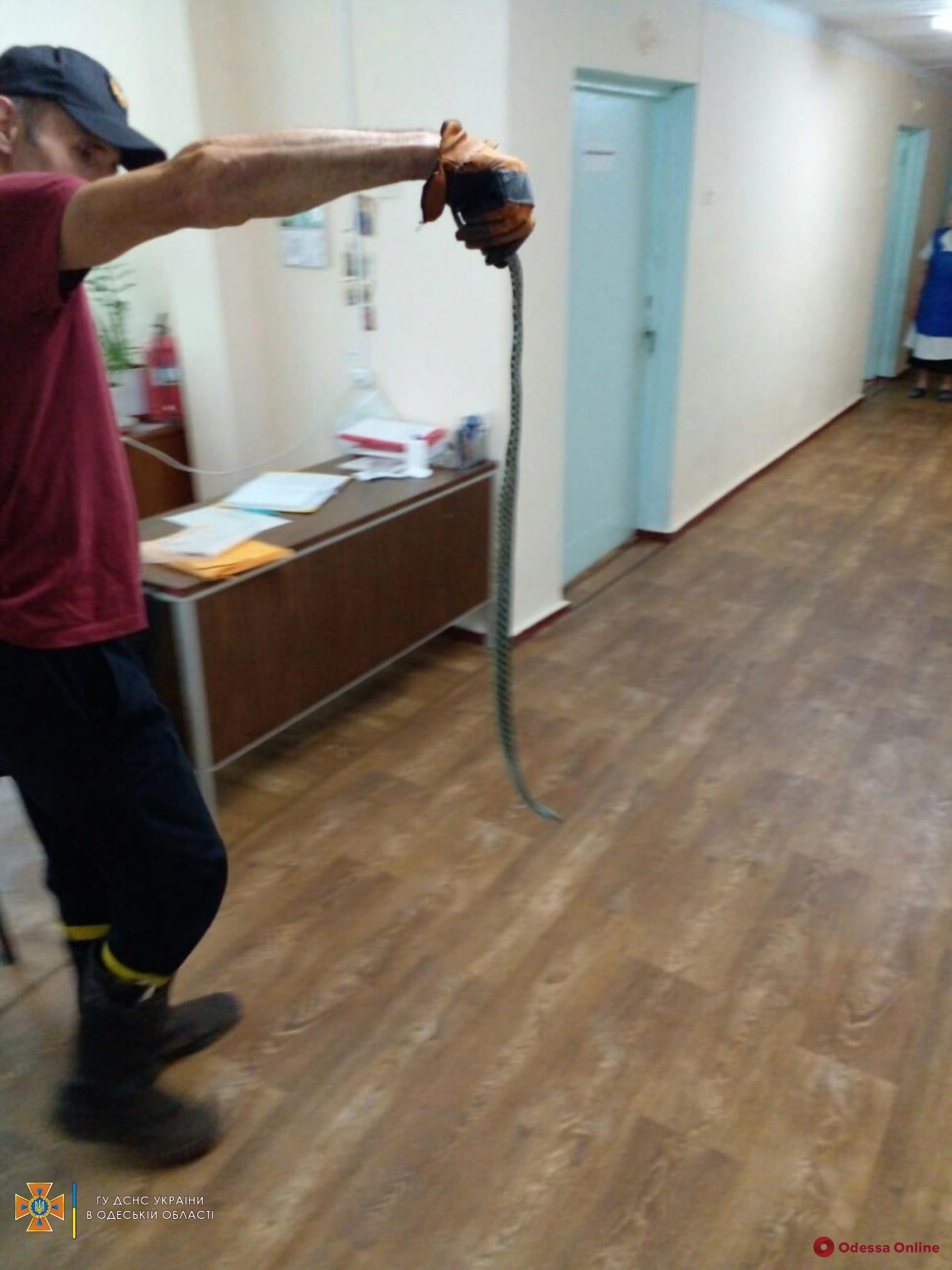 В Одесской области уж устроил переполох в неврологическом отделении