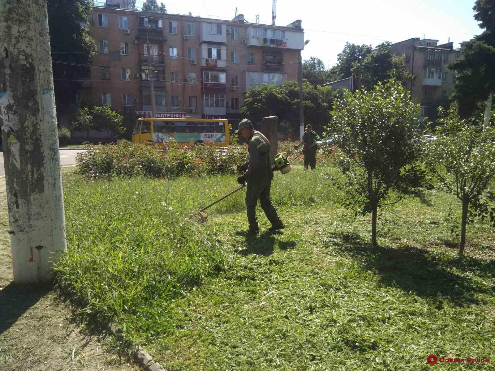 Одесситов просят сообщать о местах массового произрастания амброзии